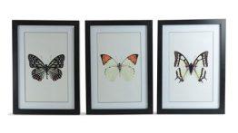 Tavla fjärilar